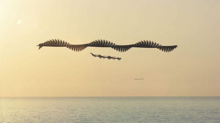 Ornithographies di Xabi Bou